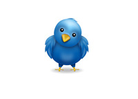 Twitter Bird - Confused - Illustration